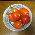 写真: 今年のトマト初収穫