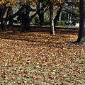 落ち葉のジュウタン2