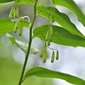 写真: 細い枝に見事