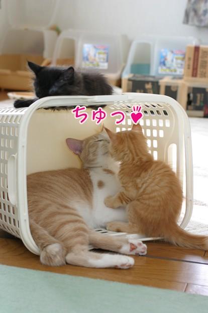 Photos: ちゅっ♪
