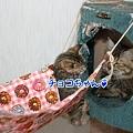 Photos: チョコちゃん♪